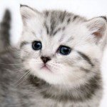 kittens - kleine katjes