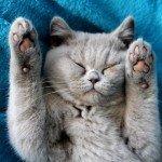 baby kat