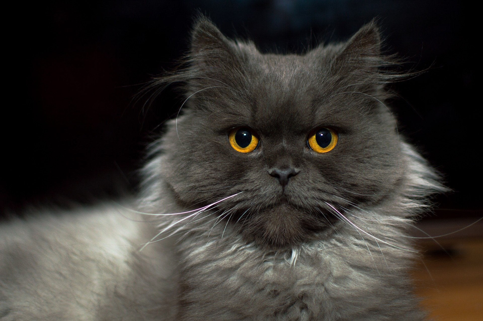 Territorium en sproeien katten