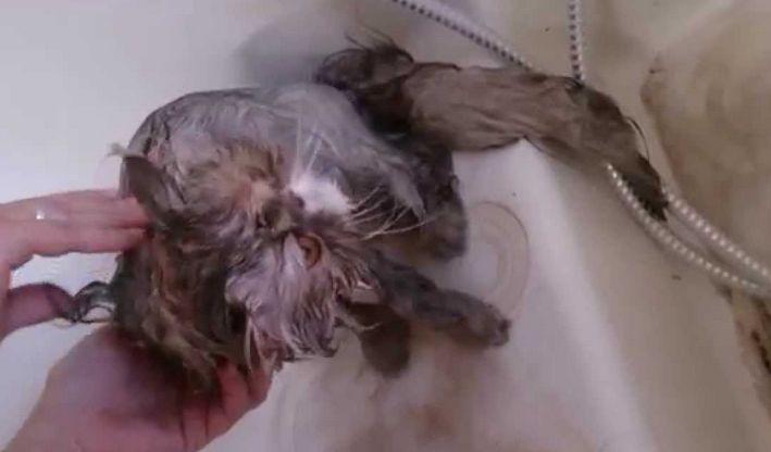 Verzorging van de kat - verzorging kat