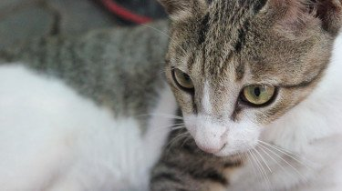 kattengezicht