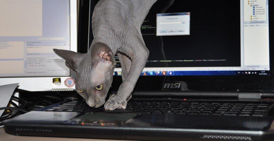 Nieuwe databank voor registratie van katten - muizenjacht