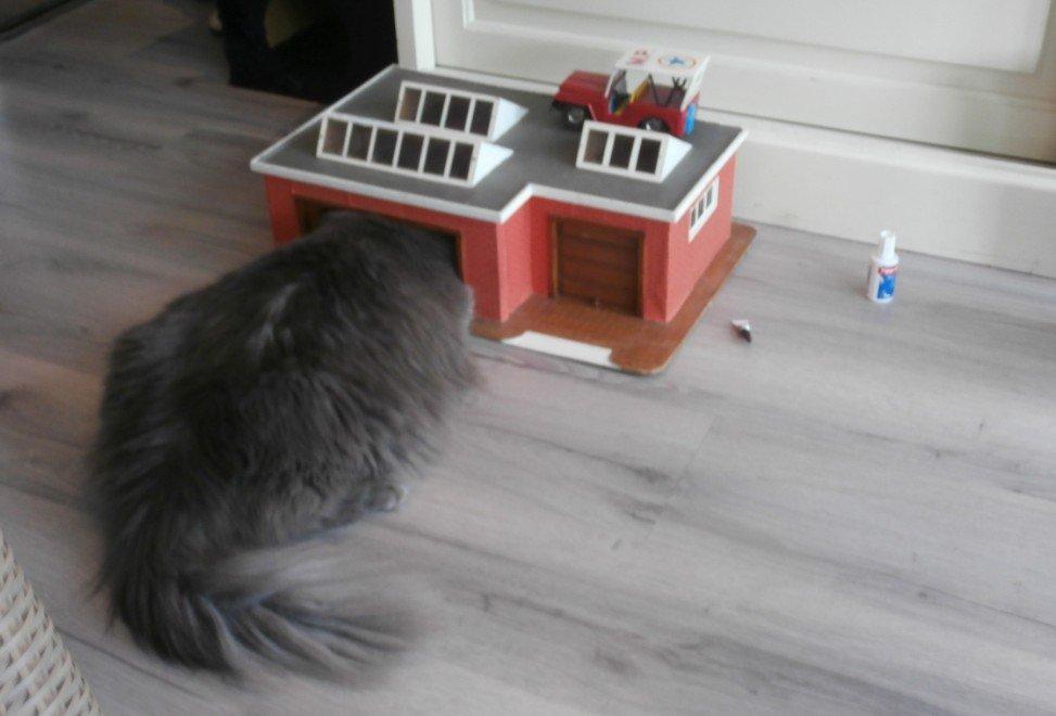 Siberische kat in huis