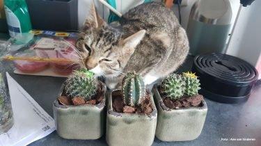 Lijst me giftige planten voor katten