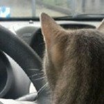 Mijn kat is bang in de auto