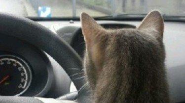 Mijn kat is bang in de auto
