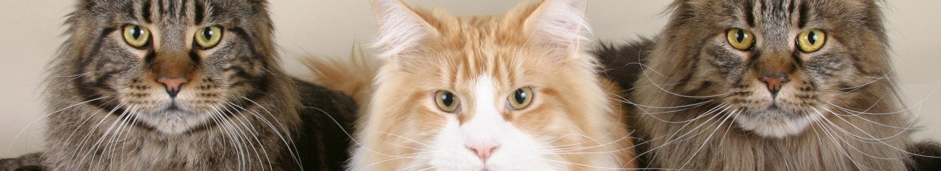 mainecoon-banner