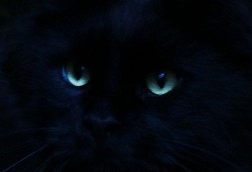 katten zien spoken