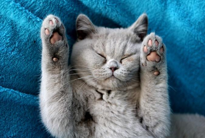 kattenasiel en opvang katten in Belgie