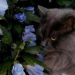 katten spreekwoorden