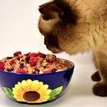 gezonde kattenvoeding