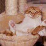 Krabpaal helpt katten bij het slijpen van klauwen