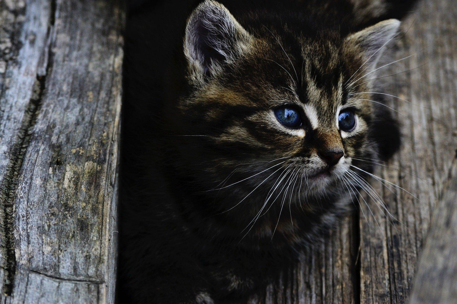 Gevonden katten
