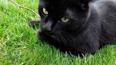 Kat vermist of ontsnapt