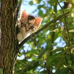 flyeren kat vermist