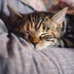 Kat niest, wat kan je doen om dit te verhelpen