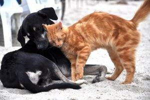 Vermiste kat komt na 4 maand terug naar huis en brengt vriendje mee - poepoe en jack keren terug naar huis